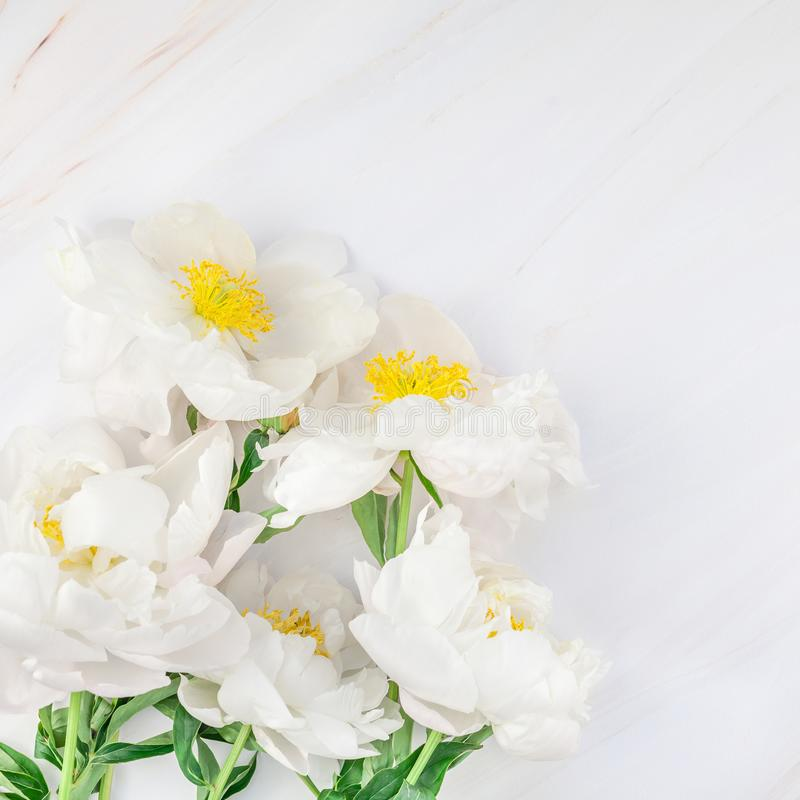 White peony flowers on marble background. Beautiful blooming white peony flowers on marble background with copy space in minimal style, square template for stock photography