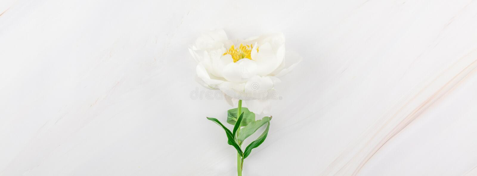 White peony flowers on marble background. Beautiful blooming white peony flowers on marble background with copy space in minimal style, template for your design stock photo