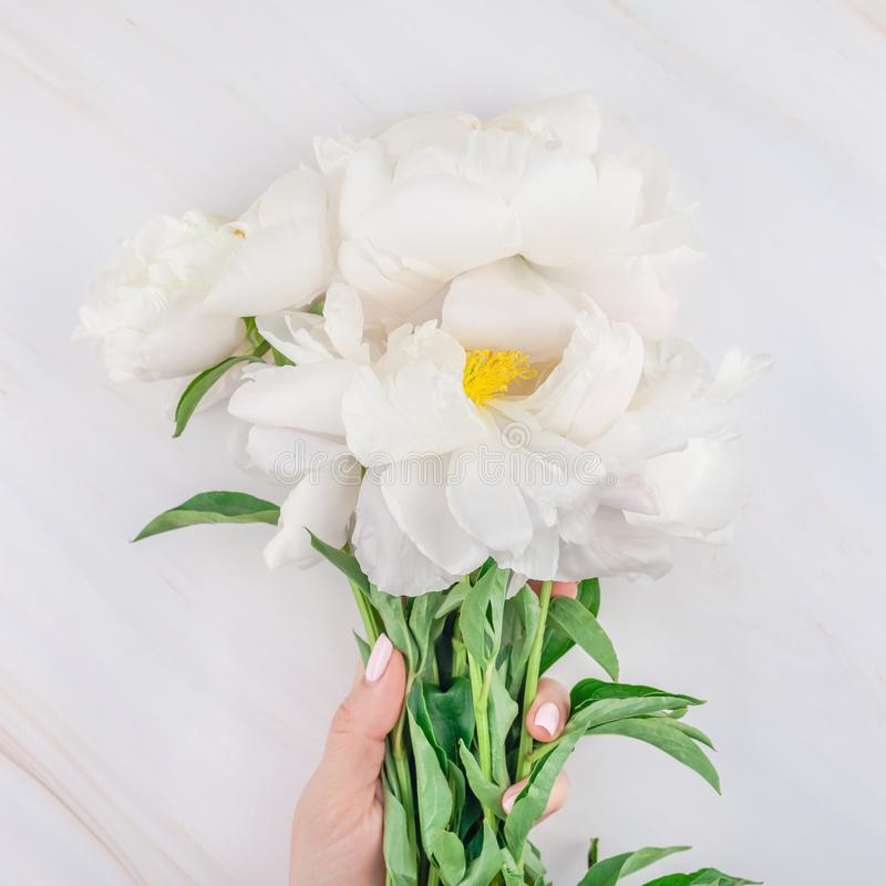 White peony flowers on marble background. Beautiful blooming white peony flowers on marble background with copy space in minimal style, square template for royalty free stock photo