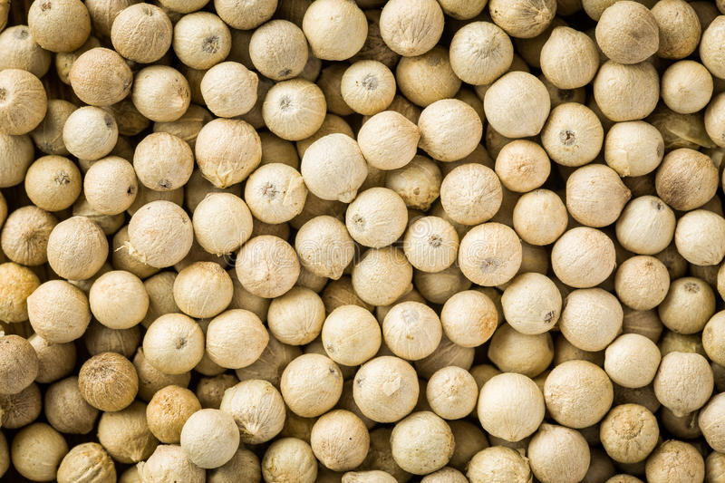 White pepper. Spices of white pepper in detail stock photography