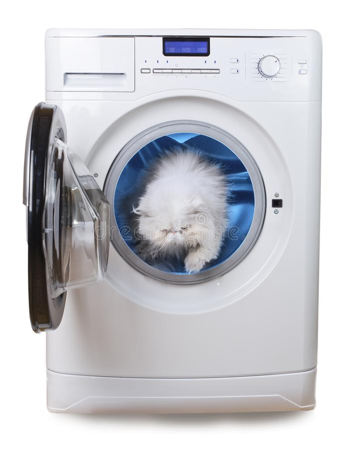White Persian cat, purity symbol, inside laundry washing machine royalty free stock images