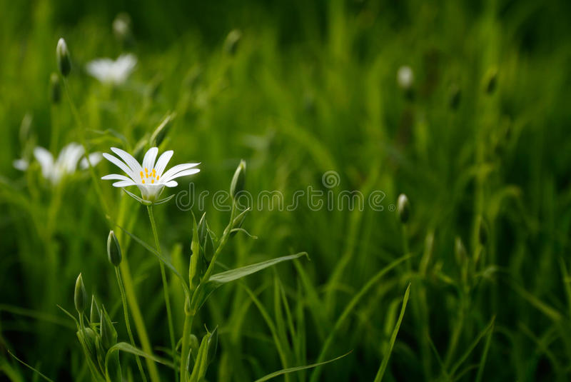 White Petal Flower With Green Linear Leaves Free Public Domain Cc0 Image