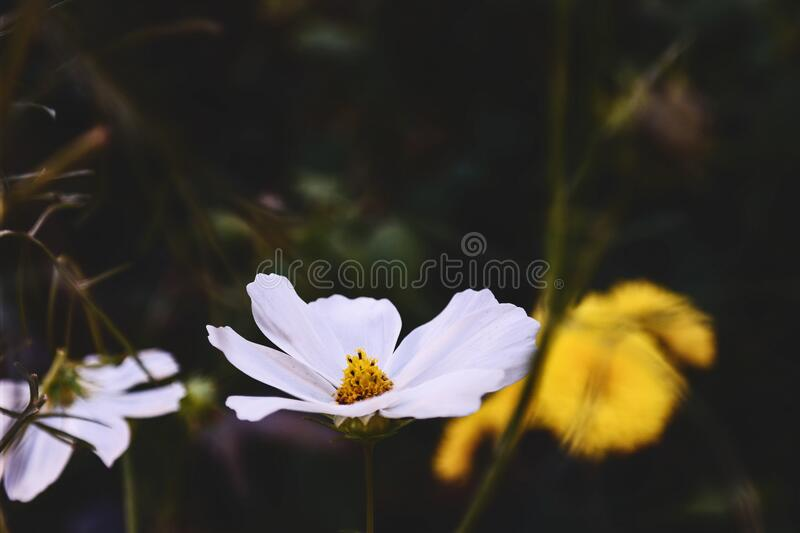 White Petal Flower Near Yellow Flower during Daytime royalty free stock photos