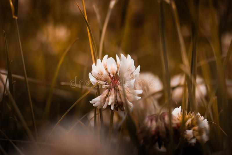 White Petal Flower in Shallow Focus Photography royalty free stock photo