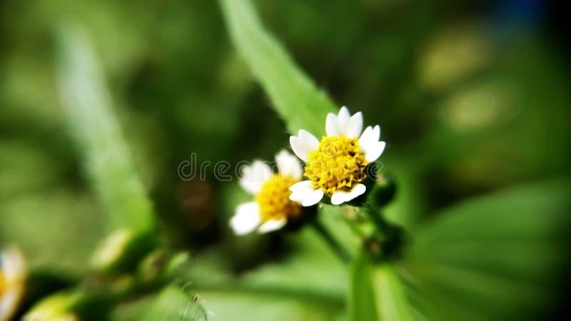 White Petaled Flower stock image