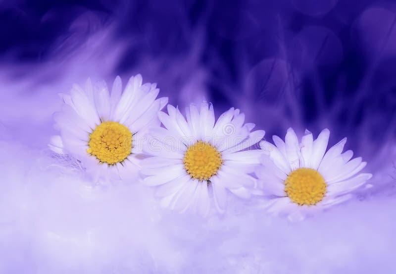 White Petaled Flower Free Public Domain Cc0 Image