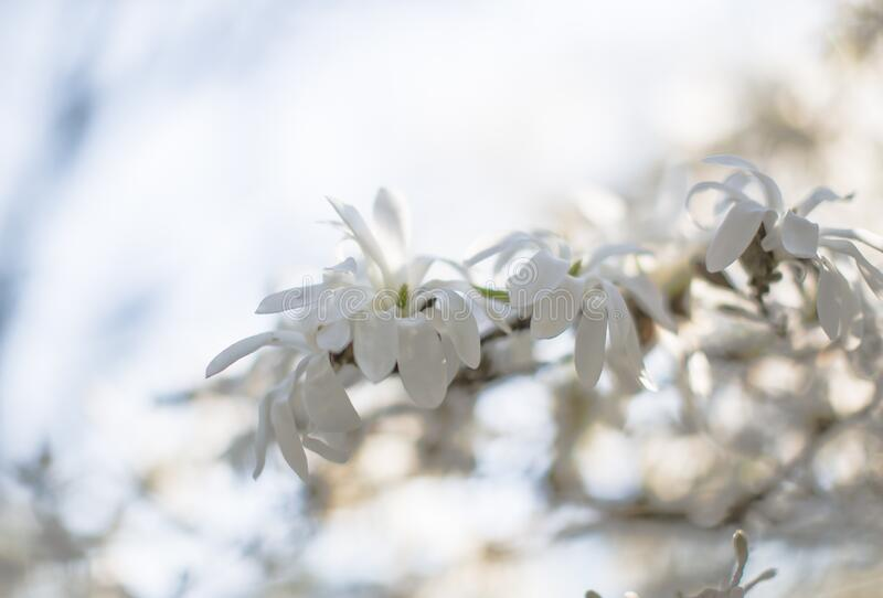 White Petaled Flower during Daytime royalty free stock photography