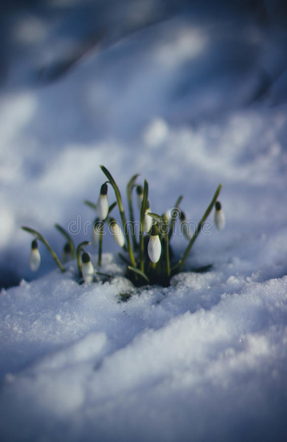 White Petaled Flower On Snow Surface Free Public Domain Cc0 Image