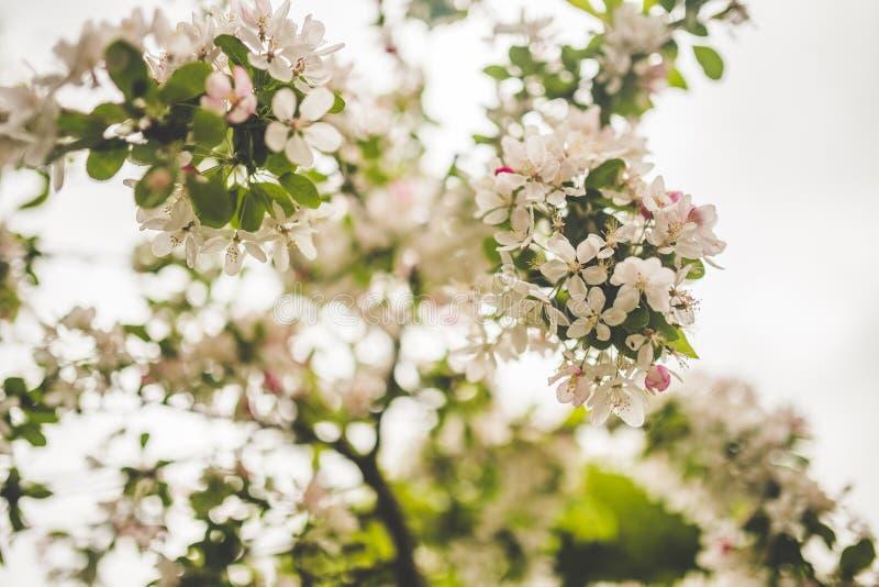 White Petaled Flowers royalty free stock photo