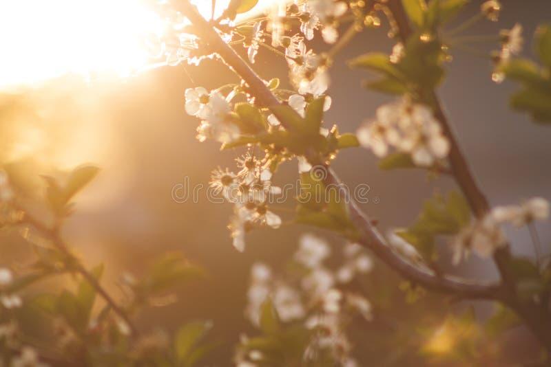 White Petaled Tree During Daytime Free Public Domain Cc0 Image