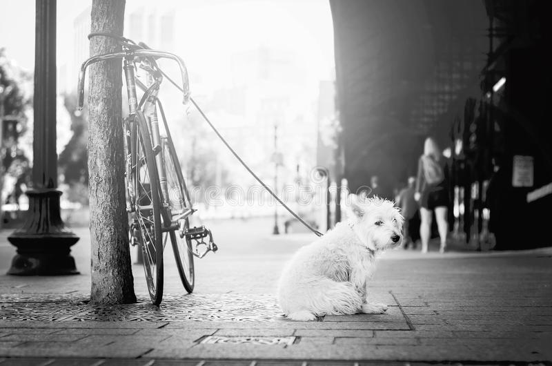 White, Photograph, Black, Black And White royalty free stock image