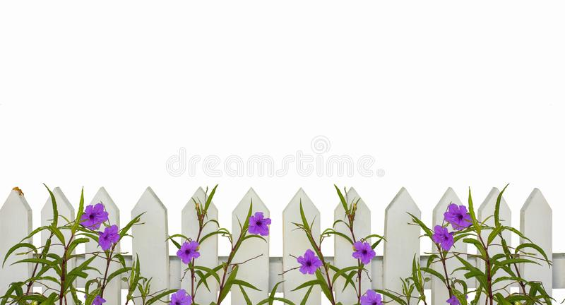 White picket fence border with purple flowers border isolated on white with space for copy above - will tile horizontally stock photography