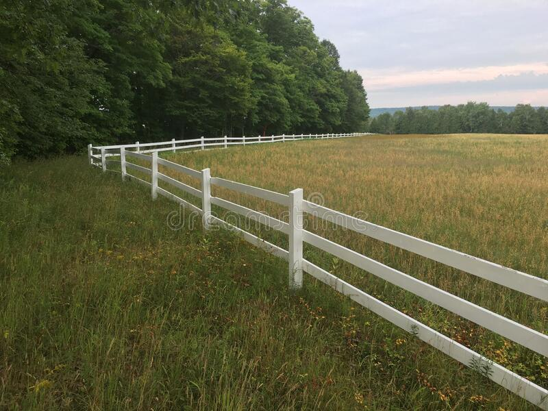 White Picket Fence Over Barley Field stock photography