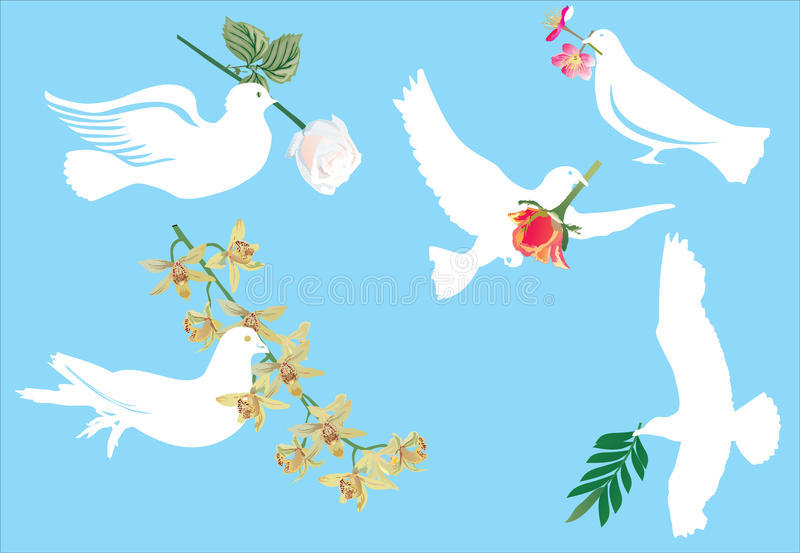 Download White Pigeon And Flowers Royalty Free Stock Photos - Image: 10338088