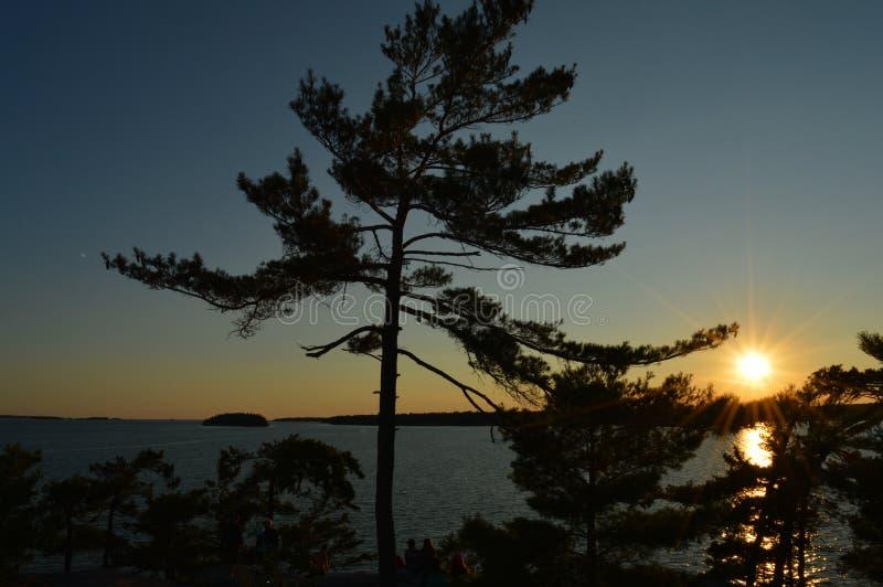 White Pine och solnedgång royaltyfria bilder