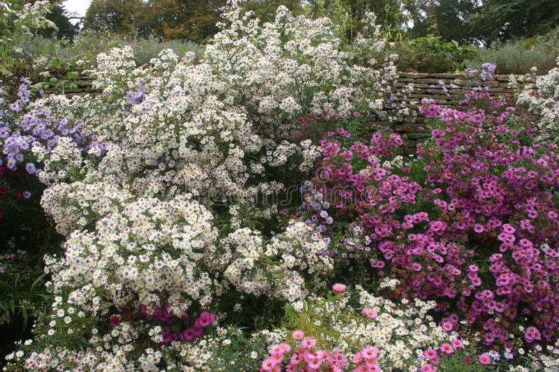 Pink and white flower bed. White, pink and lilac flowers in a flower bed with grass to one side. Dense stand of blooms royalty free stock images
