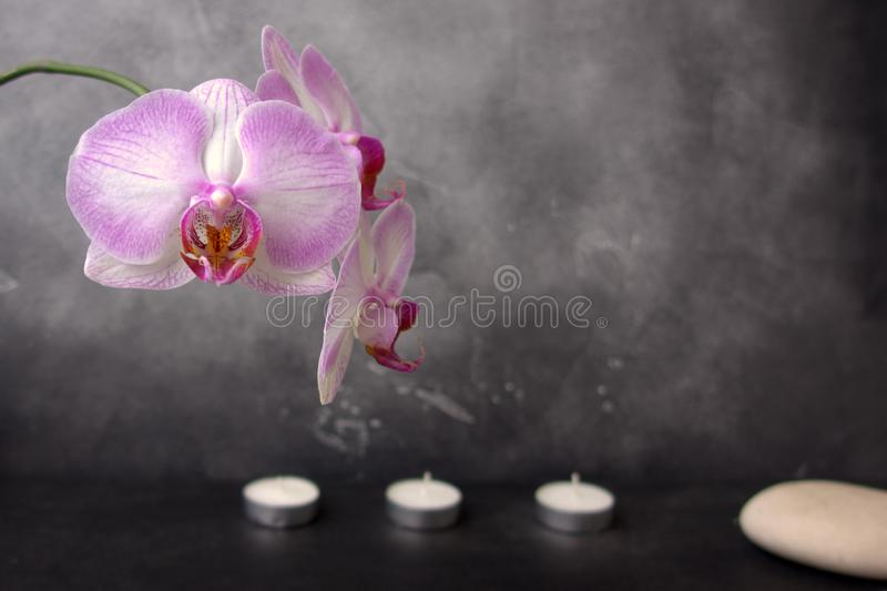 White and pink orchid, spa stone, and three candles on grey background royalty free stock image