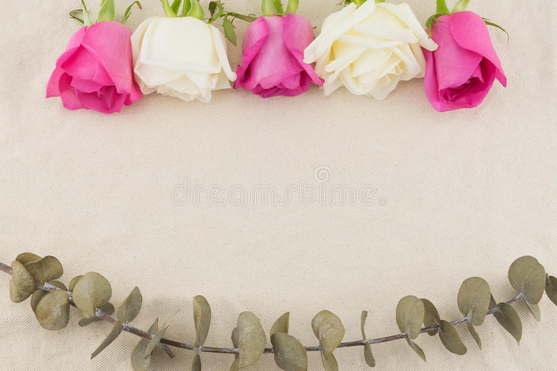 White and pink roses with dry baby eucalyptus leaves royalty free stock photos