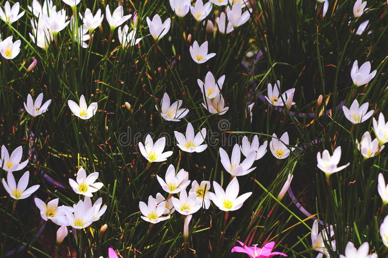 White and pink tiny flowers nature. Background stock photos
