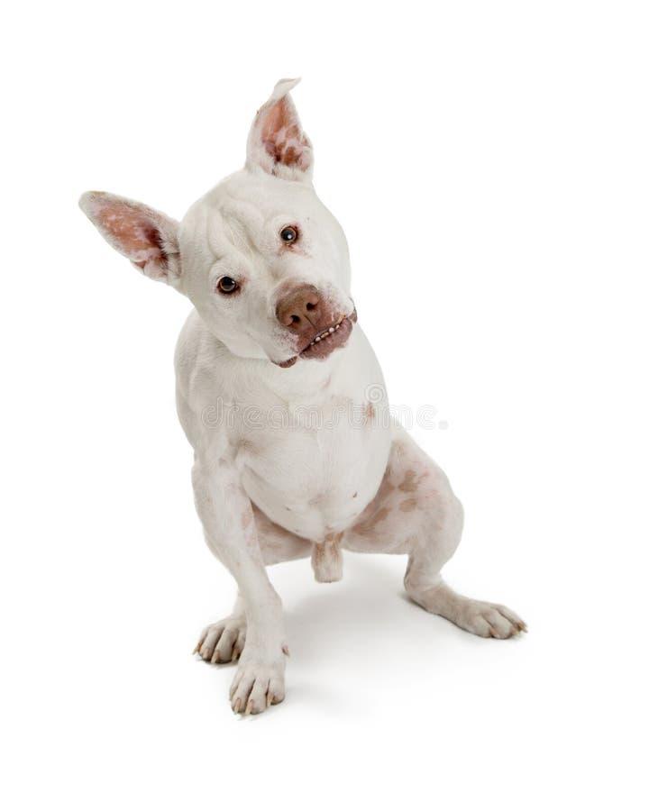 Dog With Three Legs royalty free stock photo