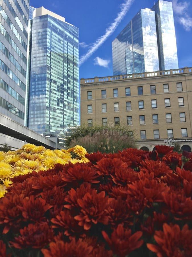 White Plains Beauty. Beautiful fall flowers set beneath White Plains, NY office towers royalty free stock image