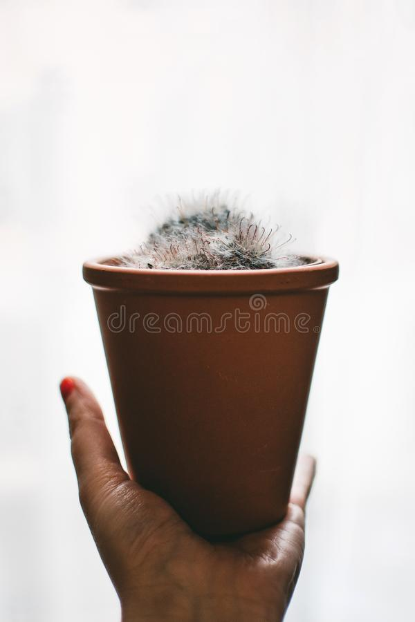White Plant and Brown Pot stock photography