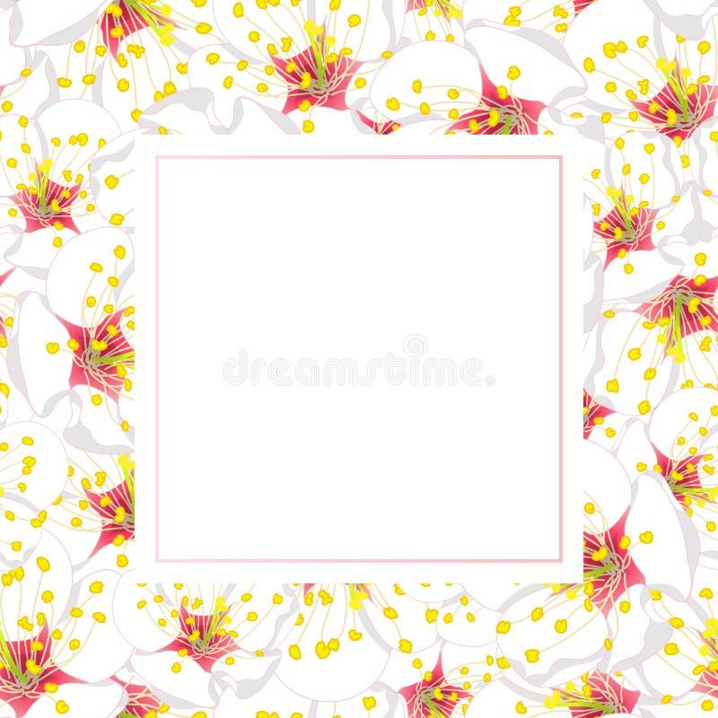 White Plum Blossom Flower Banner Card. Vector Illustration vector illustration