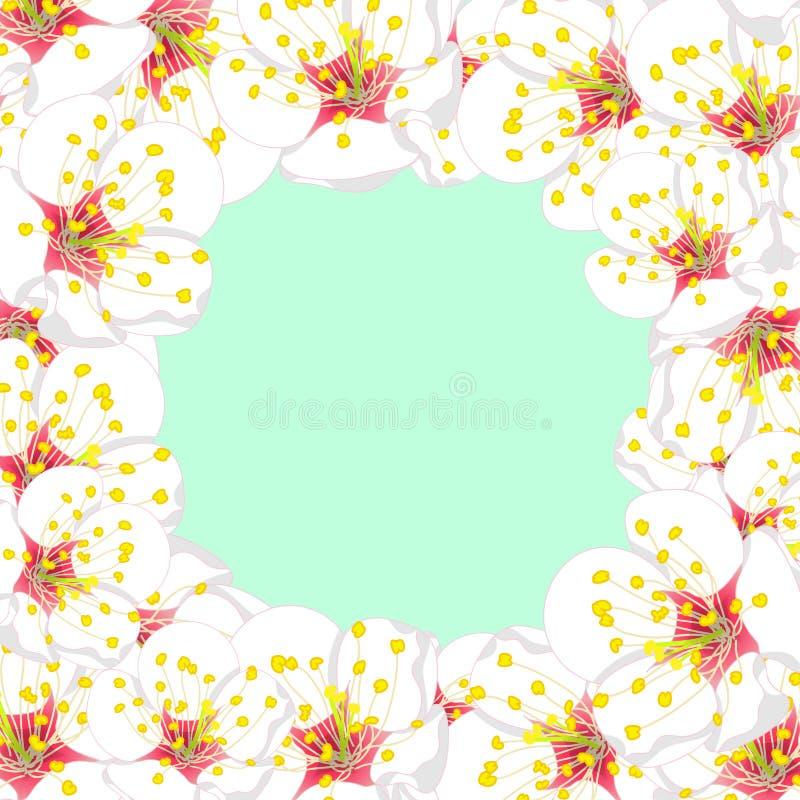 White Plum Blossom Flower Border isolated on Green Mint Background. Vector Illustration royalty free illustration