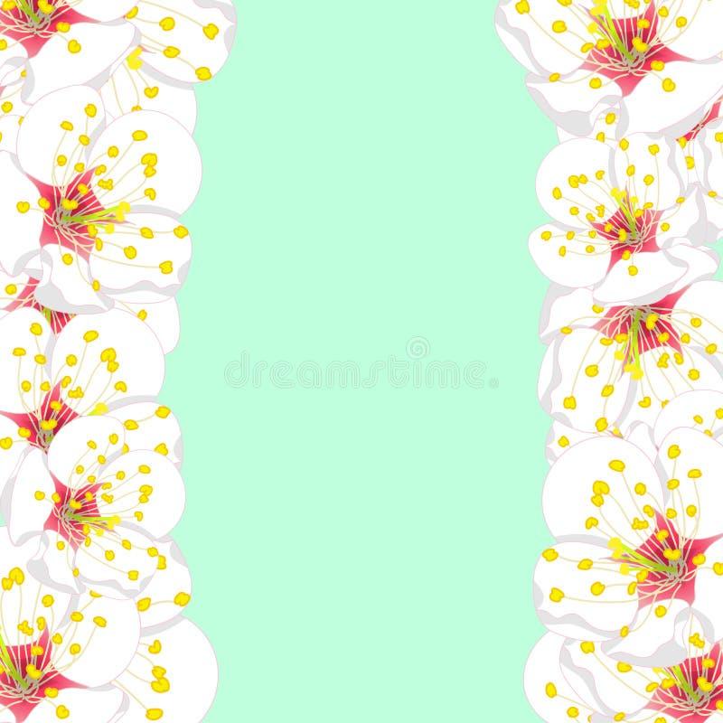 White Plum Blossom Flower Border isolated on Green Mint Background. Vector Illustration vector illustration