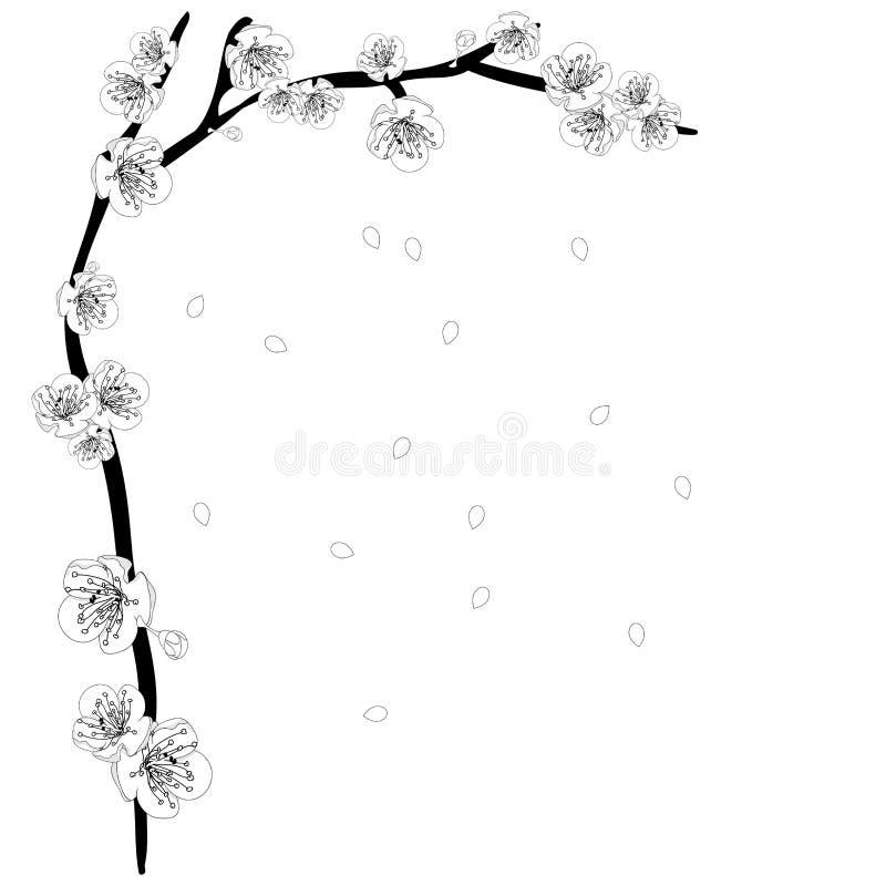 White Plum Blossom Flower Outline Border. Vector Illustration. vector illustration