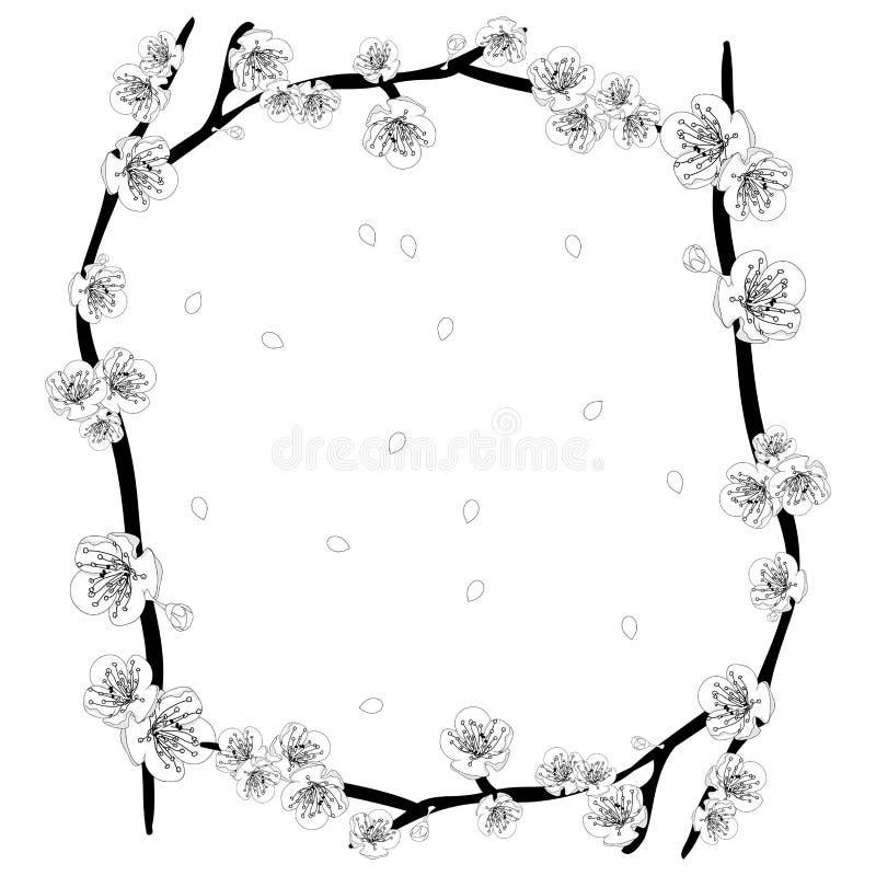 White Plum Blossom Flower Outline Border. Vector Illustration. stock illustration