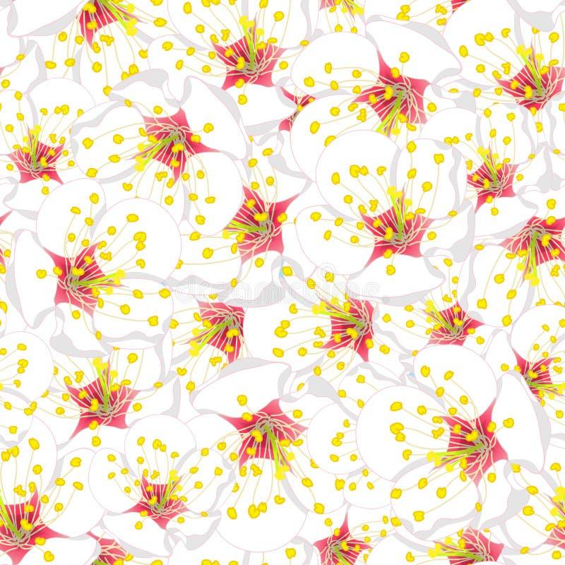 White Plum Blossom Flower Seamless Background. Vector Illustration. vector illustration