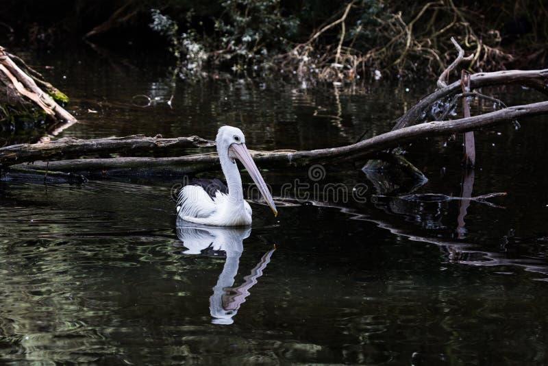 White plumage royalty free stock image