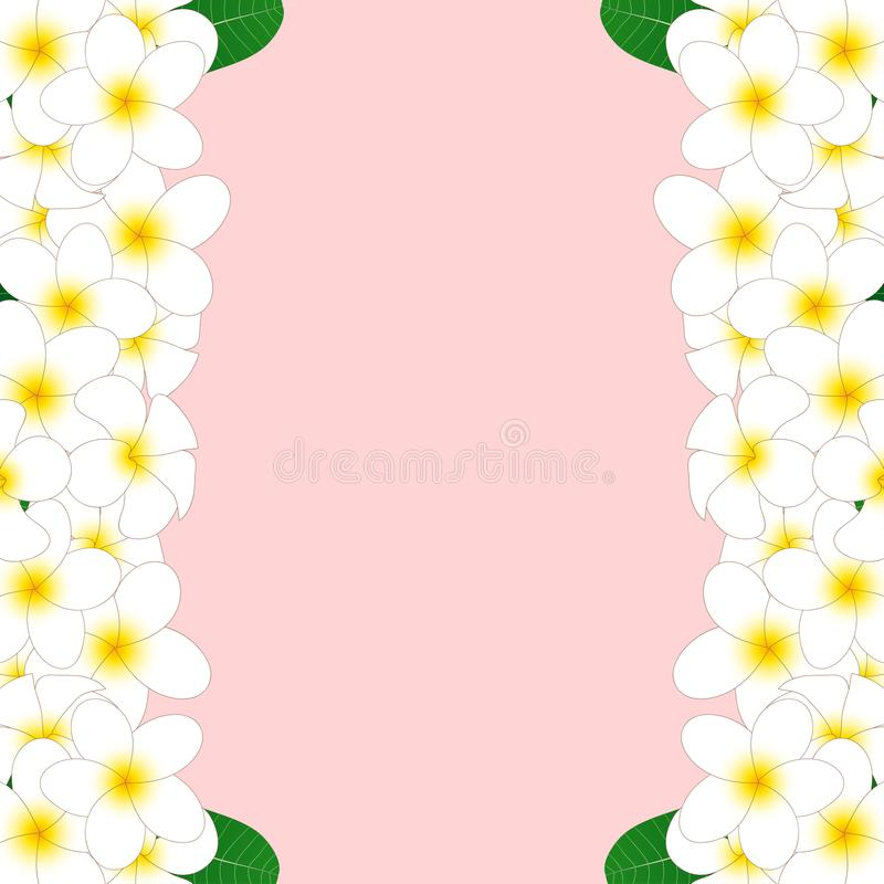 White Plumeria Border, Frangipani isolated on Pink Background. Vector Illustration. vector illustration