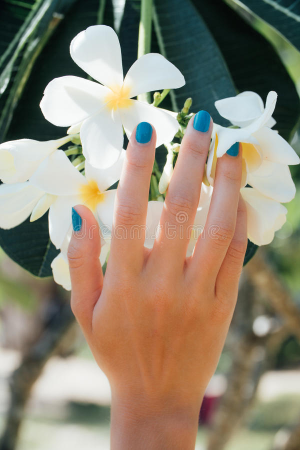 White plumeria Flower on hand With a turquoise bracelet . stock photo