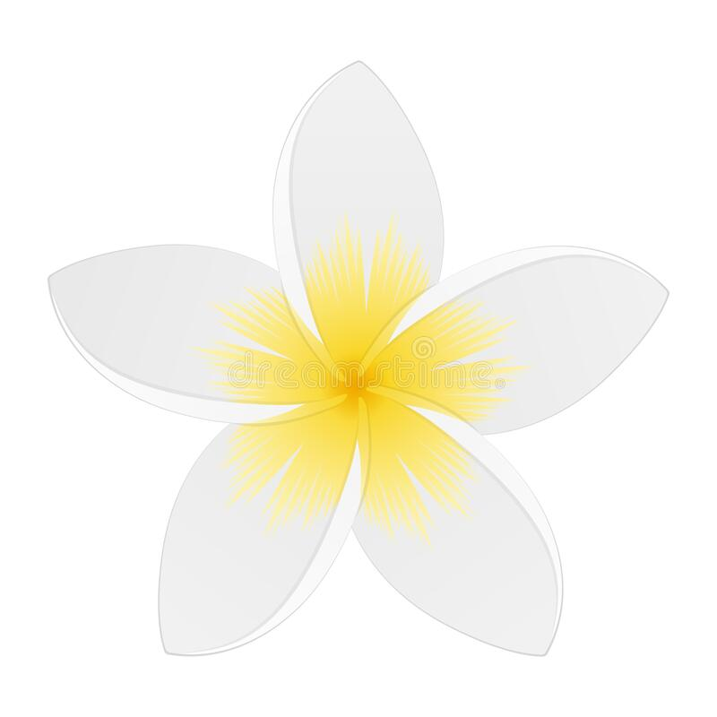 Free White Plumeria. Tropical Flower. Isolated On White. Vector Illustration Royalty Free Stock Photography - 182272267