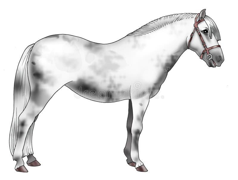 Download White pony stock illustration. Illustration of drawing - 4251299
