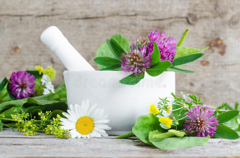 White porcelain mortar with healing flowers of clover and chamomile. Herbal medicine, organic homemade cosmetics and spa concept. White porcelain mortar with royalty free stock image