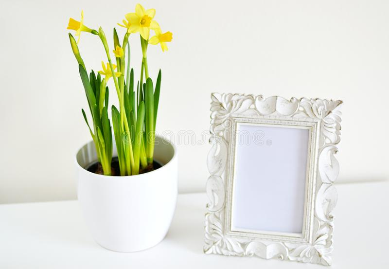 White pot with daffodils and photo frame vintage style white. White pot with daffodils and photo frame vintage style, white background, spring time stock images