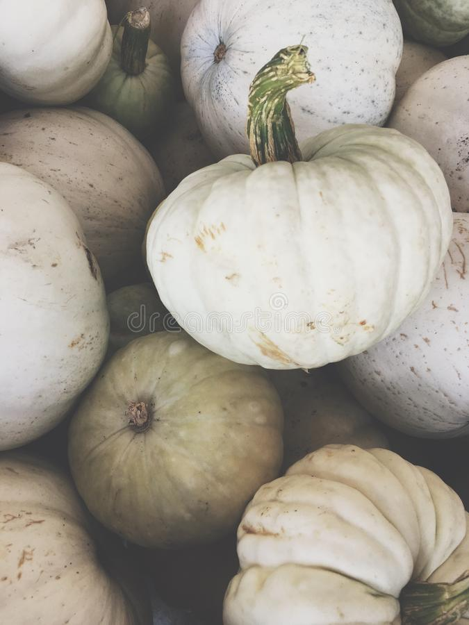 Free White Pumpkins For Halloween Royalty Free Stock Image - 94570756