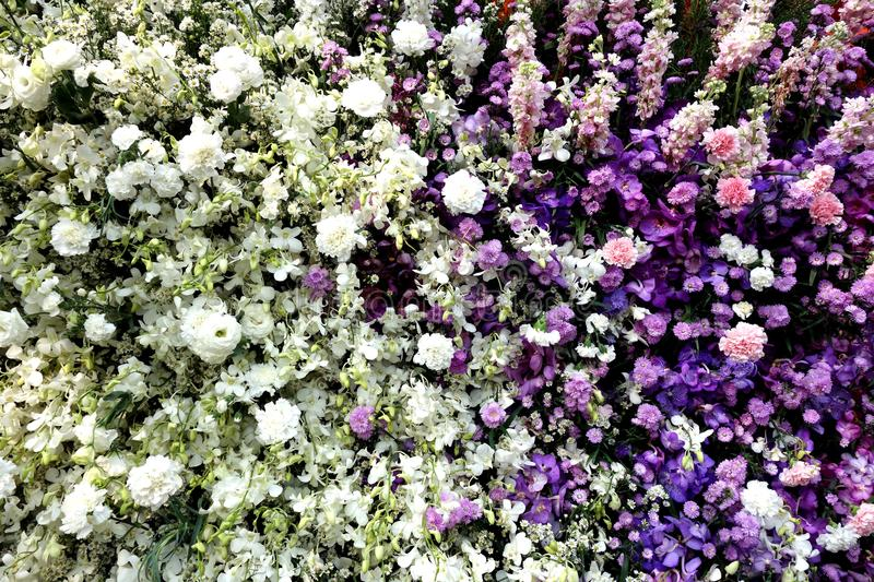 White and Purple Array of Flowers Background royalty free stock photography