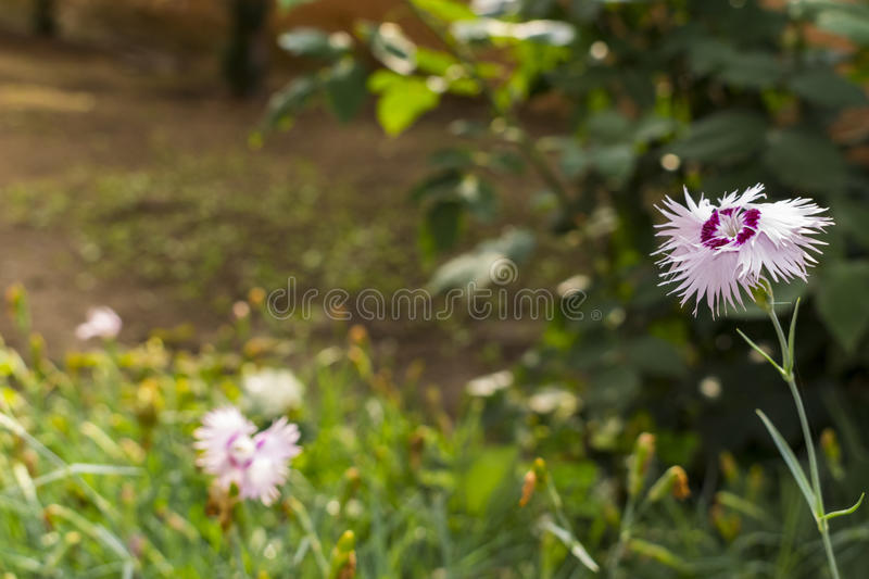White and purple circled flower close up stock photo