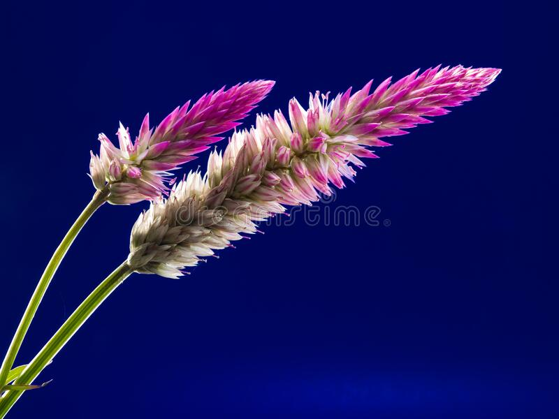 White And Purple Clustered Elongated Plant Free Public Domain Cc0 Image