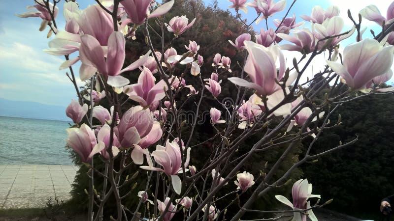 White purple flowers stock image
