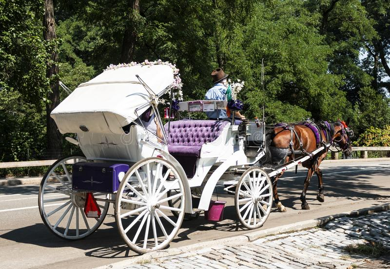 White and purple horse carriage in central park stock photography