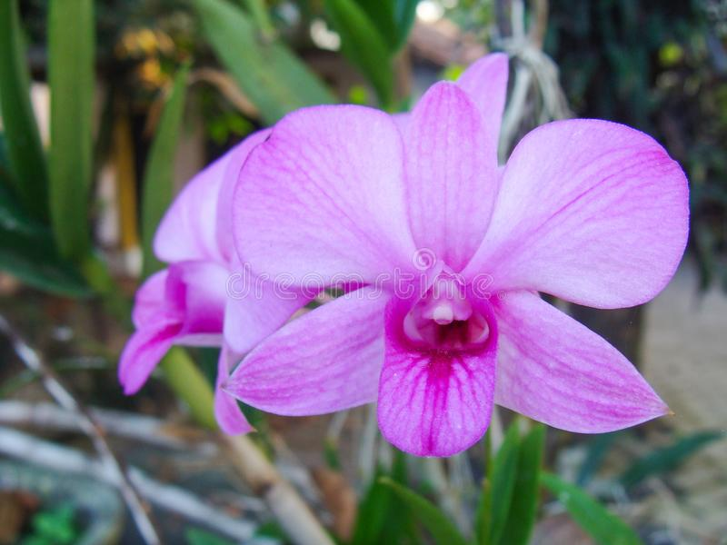 White and Purple Orchid Flower stock photo