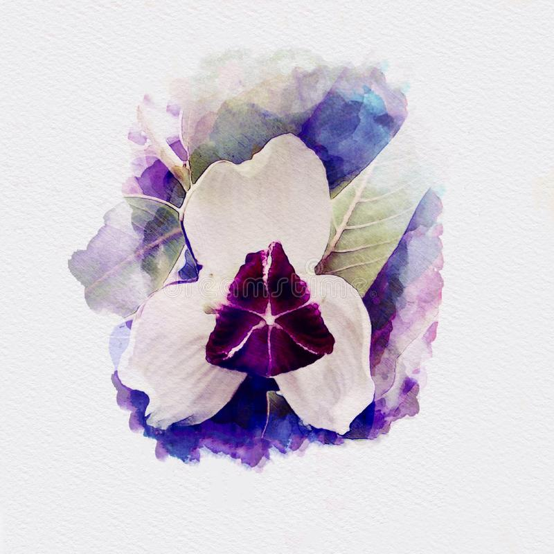 White and purple orchid watercolor painting illustration. On white paper background royalty free illustration