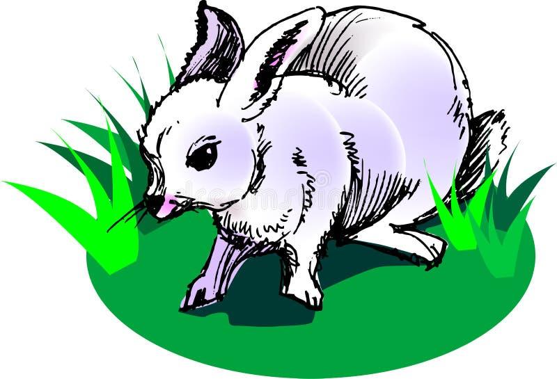 White rabbit stock illustration