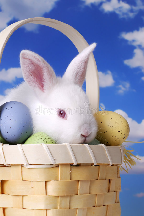White Rabbit In Basket. White rabbit in straw basket with dyed eggs stock image