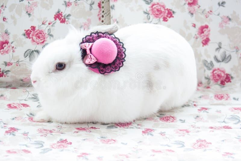 White rabbit in beatuful pink bonnet. Closeup royalty free stock image